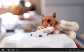 A hamster eating a tiny burrito