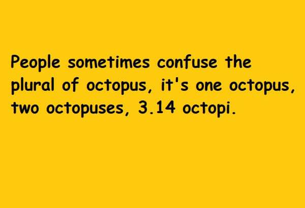 plural of octopus