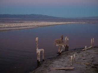Desert_Shores-10