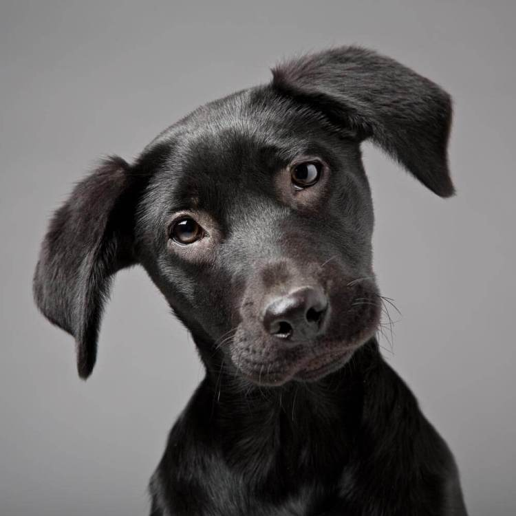 Dog Portraits - Mark Hewitson Photography of Thame, Oxfordshire