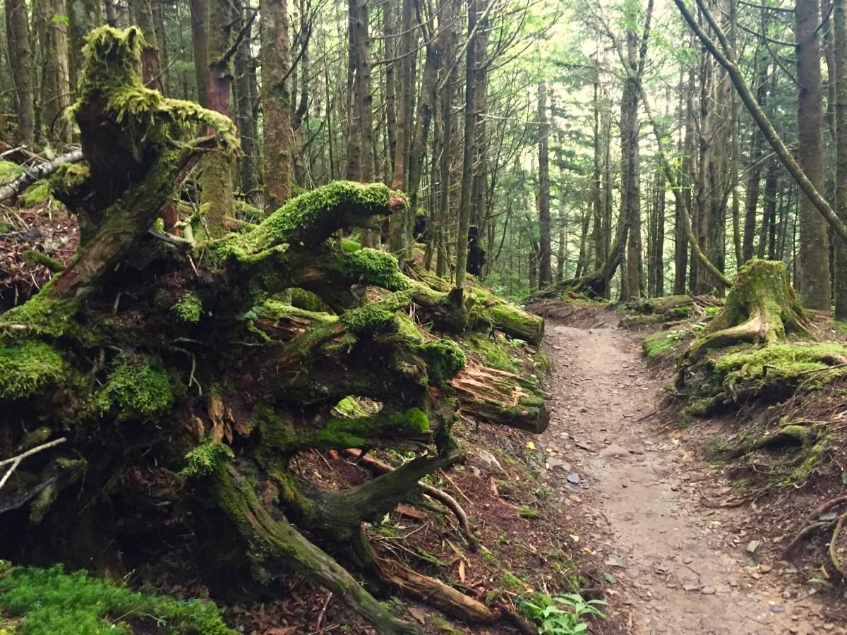 Appalachian Trail Great Smoky Mountains National Park