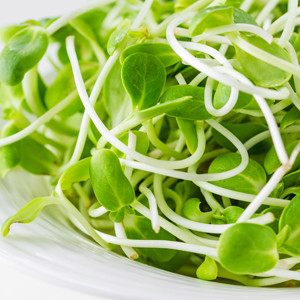 Fresh Sprouts & Microgreens