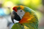 parrot-981615_960_720