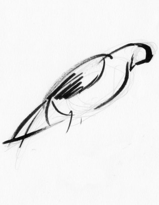 """""""Pigeon"""" Ink on paper 5""""x7"""" (2008)"""