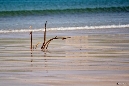 Shoreline Reflections
