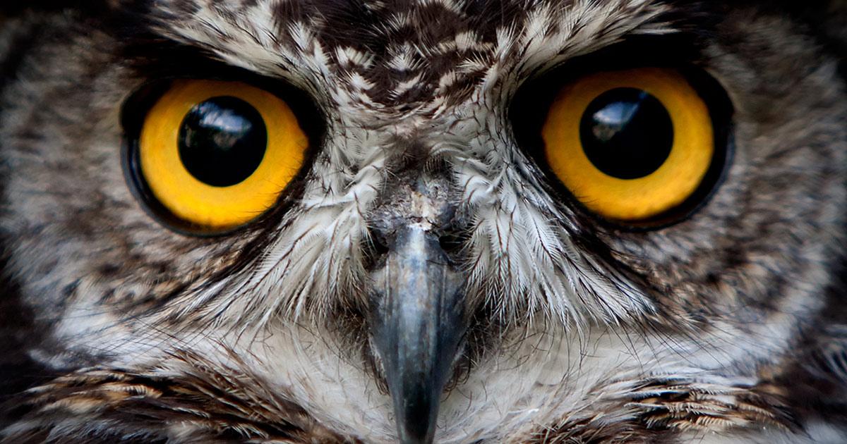Taking Melatonin Correctly for Night Owls