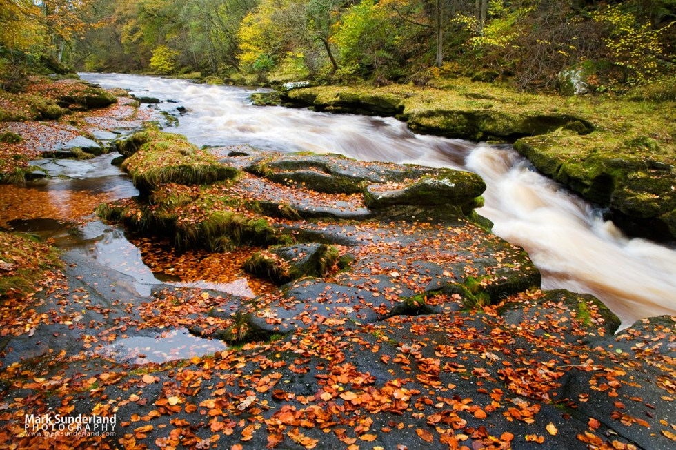 The Strid on the River Wharfe in spate after heavy rain, Yorkshire Dales