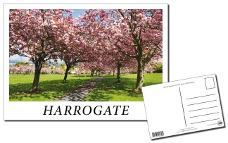 Harrogate Stray Postcard