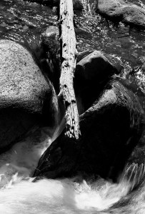 Branch Over Rock and Water, b&w, September 1984