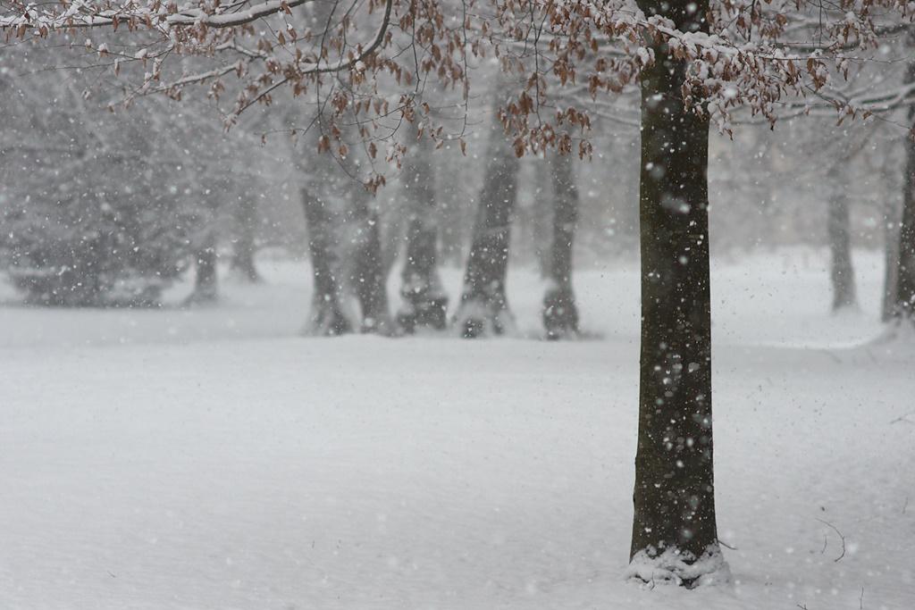 /home/springm/Bilder/2010/2010-03/Karlspark/dsc26791b.jpg