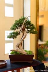 Verkaufsbaum ValentinSch