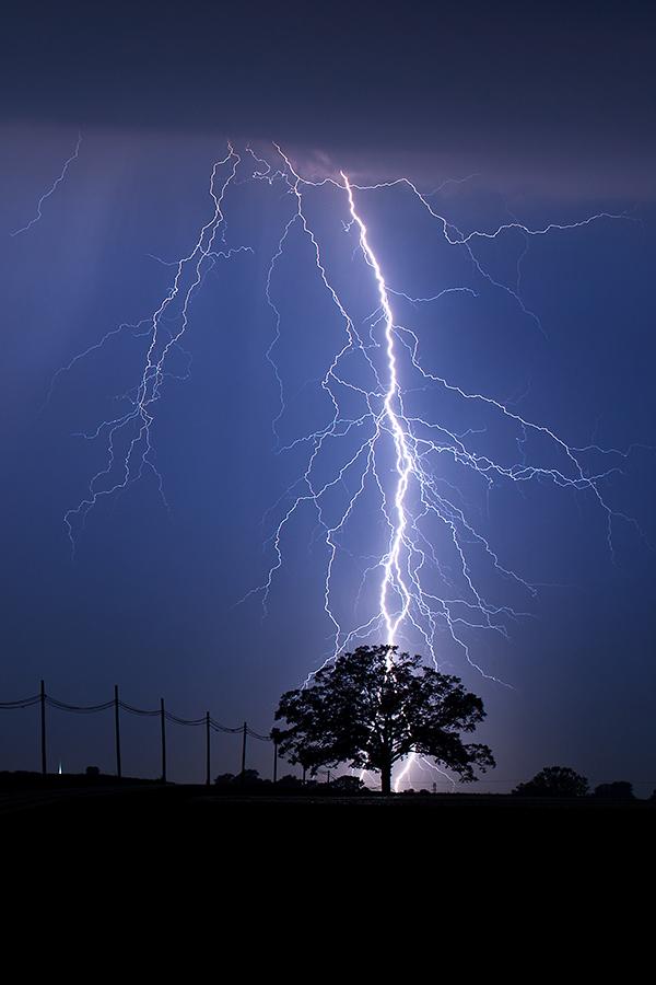 Image result for lightning striking a tree