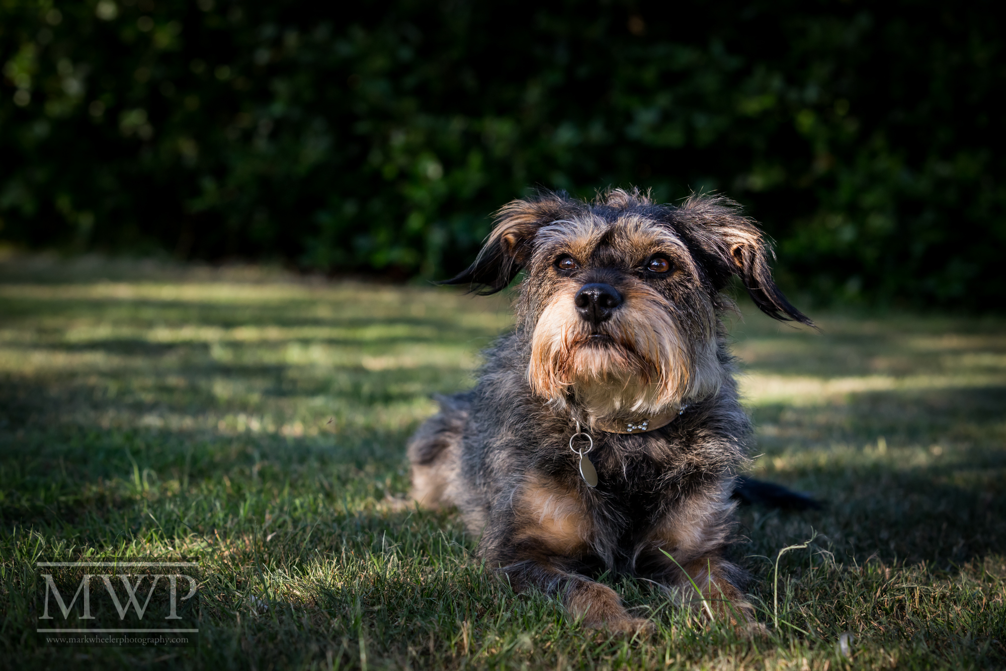 pet photography with Jazz the dog