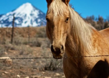 Photos from the Colorado Countryside   Horse & Cattle Ranches in Hotchkiss, CO   FamilyFreshCooking
