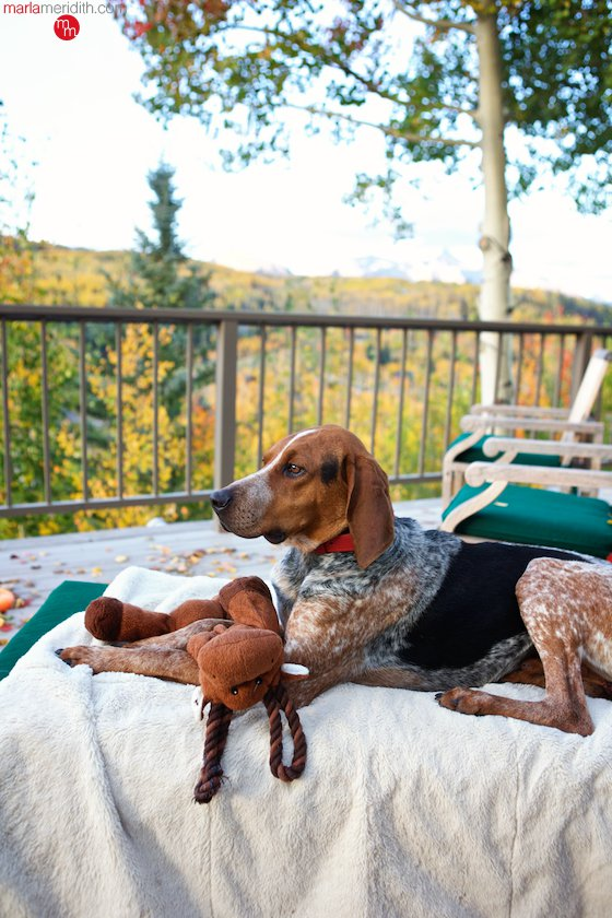 Meet Bo Meridith, our new hound dog! He loves living in Telluride, CO with his brother Moose! MarlaMeridith.com ( @marlameridith )