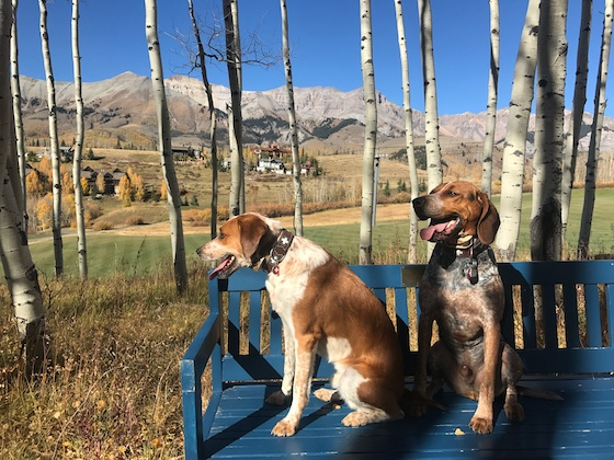 10 Daily Lessons I Learn from My Dogs | marlameridith.com #pets #dogs