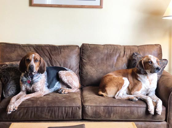 my sweet coonhounds! marlameridith.com