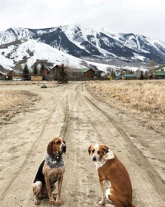 I can't get enough of being with my rescued hound dogs. For the Love of Dogs is my tribute to Moose and Bo, the coonhounds who live in Telluride, CO. MarlaMeridith.com