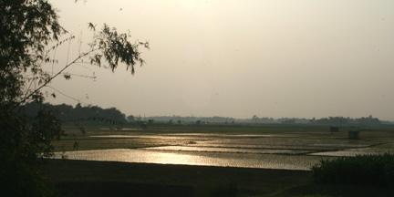 A beautiful sunset over a Bangladesh rice field.