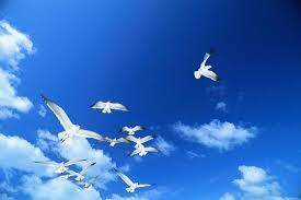 birdsimage