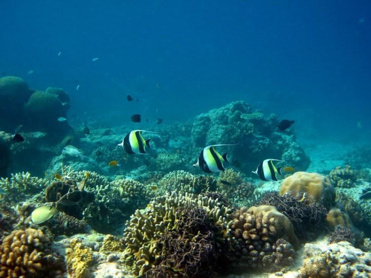 Ekosistem Terumbu Karang Pulau Lombok & 3 Gili