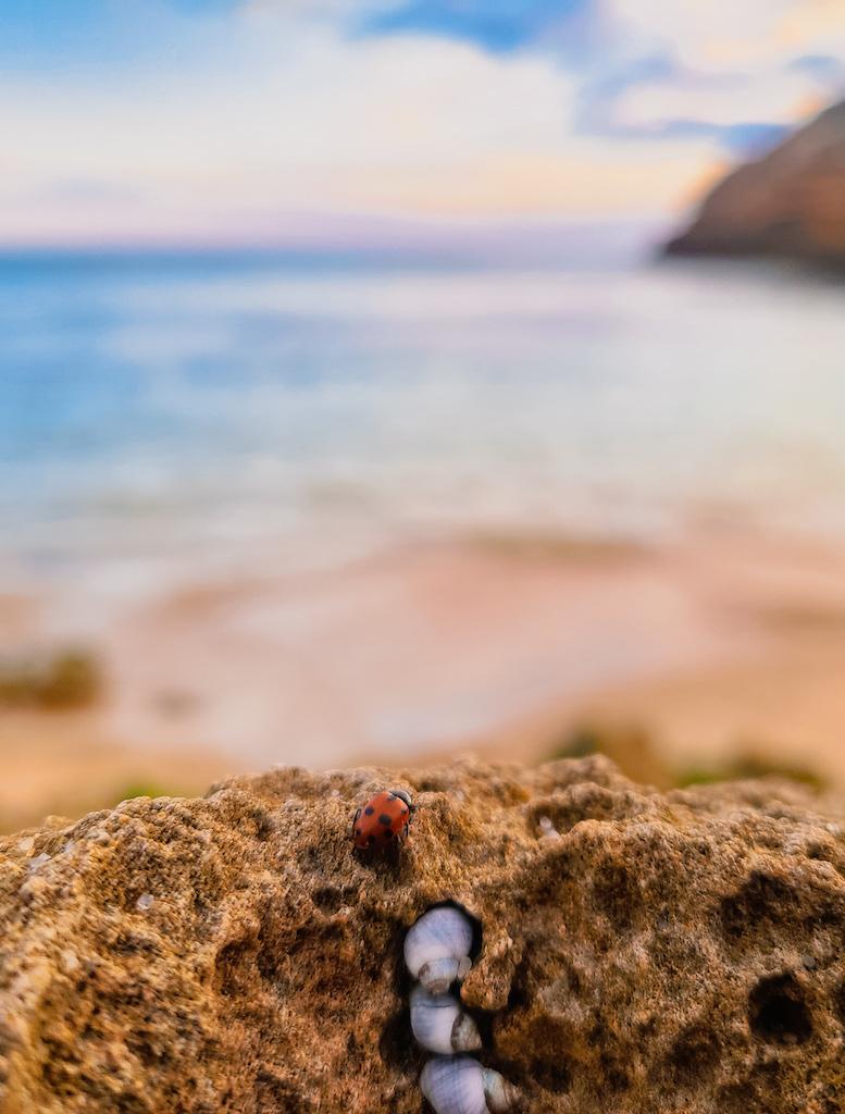 Polkadots Moonbeams Ladybug Sandy Rock Closeup Short Story Marlon Quinn