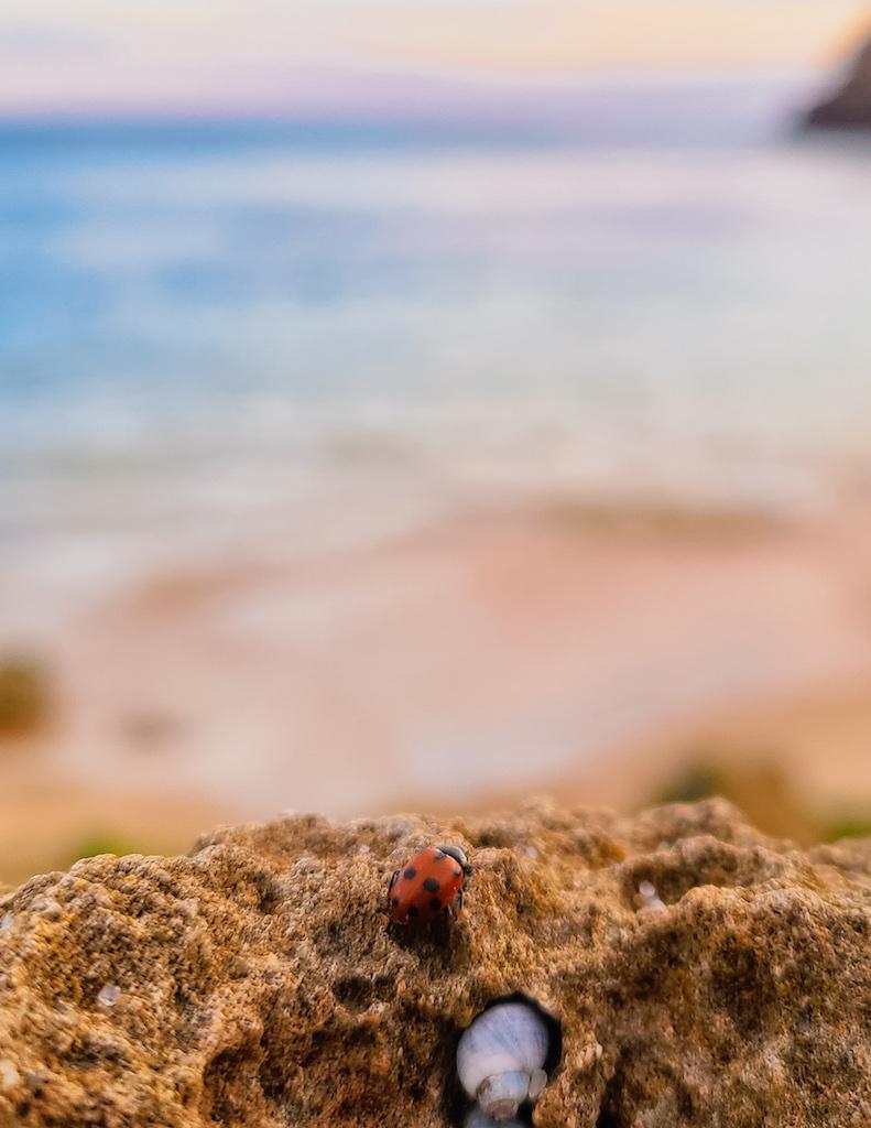 Polkadots Moonbeams Ladybug Sandy Rock Beach Short Story Marlon Quinn
