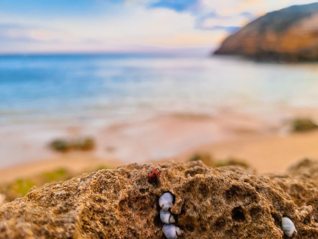 Polkadots Moonbeams Ladybug Sandy Rock Short Story Marlon Quinn