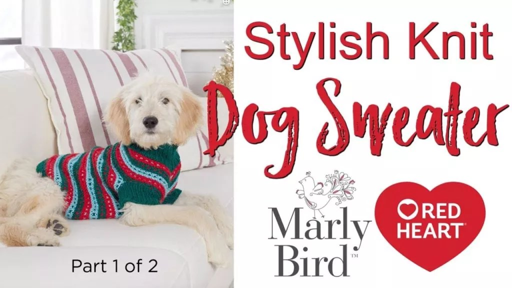Video Tutorial-How to knit the Stylish Knit Dog Sweater