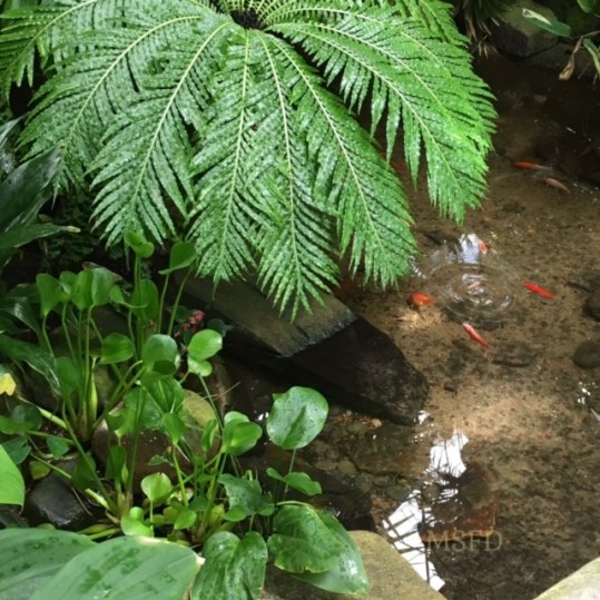 Conservatory Plants 1