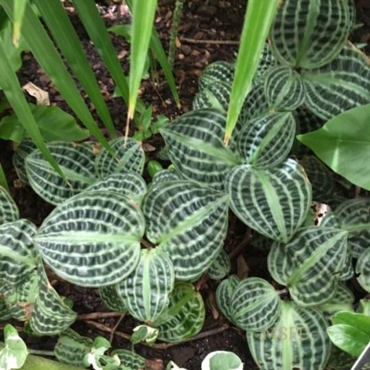 Conservatory Plants 2