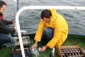 Denizanalarının çoğalma nedeni kirlilik değil, doğa olayı