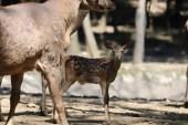 Ormanya'da yaban hayvan popülasyonu artıyor