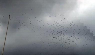 (Özel) İstanbul Boğazı semalarında göç eden leylek sürüsü kamerada