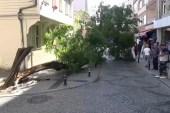 (ÖZEL) Silivri'de yıkılan ağaç caddeyi trafiğe kapattı