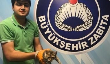İşkenceye uğrayan kediye Büyükşehir şefkati