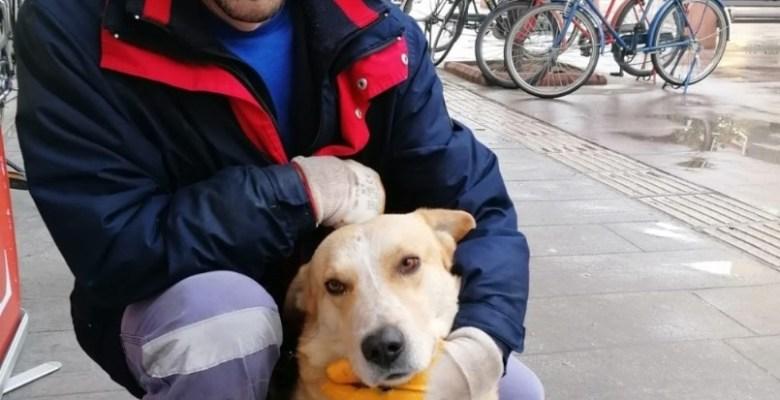 Sokak köpeğini çalı süpürgesiyle kaşıdı taktir kazandı