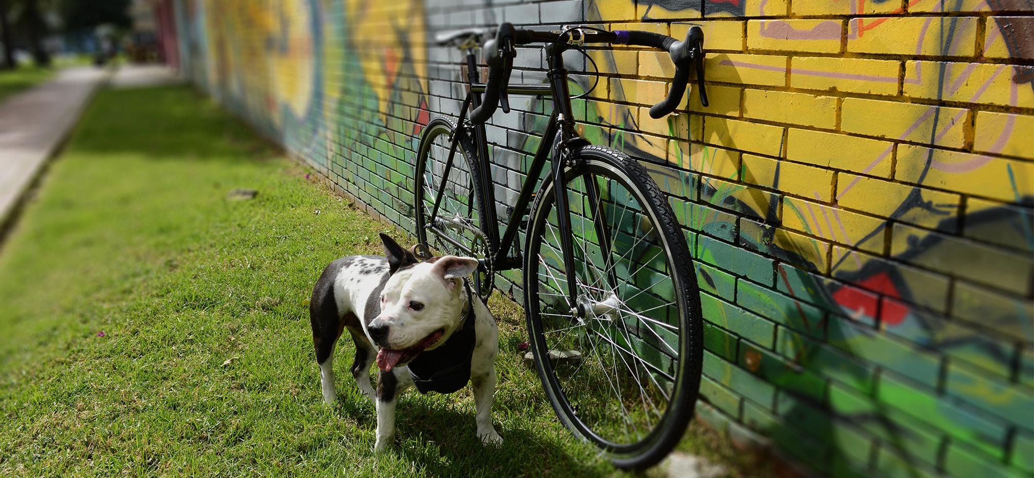 Bicicleta fixie piñon libre