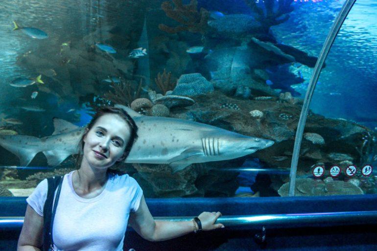oceanarium rekin