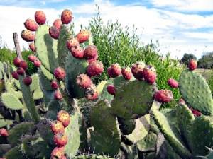 Aknarie une plante voyageuse