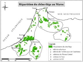 Elaboration-dune-base-de-donnees-geographiques-et-catalogue-des-stations-de-la-suberaie-de-la4