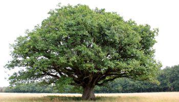publié sur le krapo arboricole