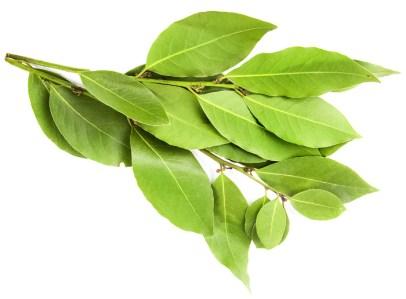 huile-essentielle-laurier-bio-01