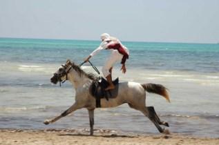 plage-equitation-animaux-fantasia-djerba-672479