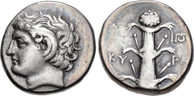 silphium-11282