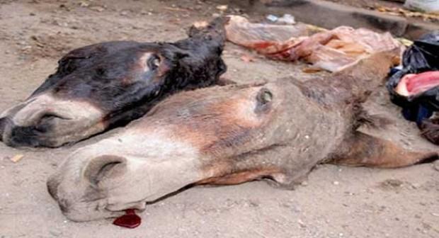 سيدي إفني: توقيف مروجين للحوم الحمير بسوق لخصاص