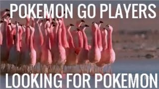 Flamingoes Pokemon Go lol