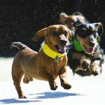 Aggieland Humane Society's Wiener Fest