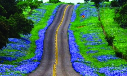 Bloom at the Chappell Hill Bluebonnet Festival