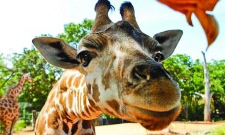 Aggieland Safari